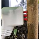 植物液流传感器