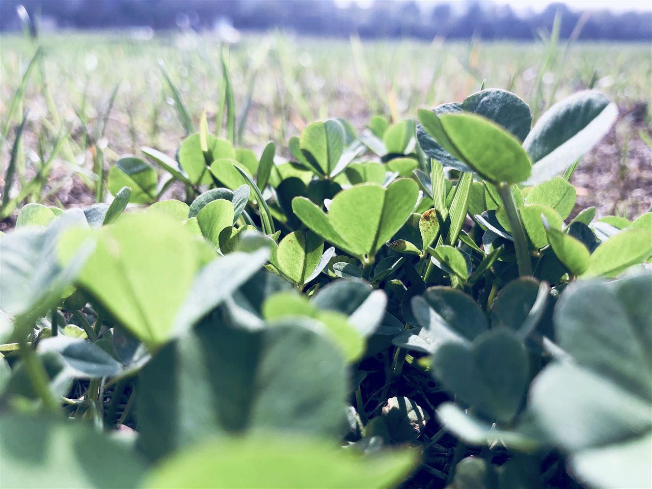 土壤污染调查、风险评估、监测等迎新规 广州发布更多细则