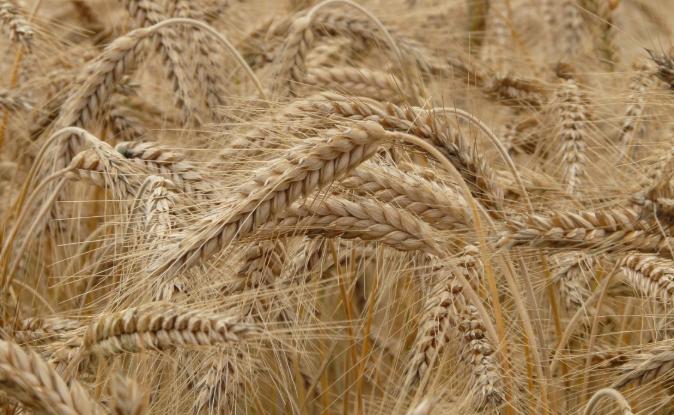 2020年糧食生產再獲豐收 儀器儀表保障糧食安全